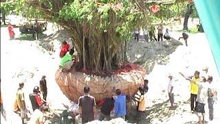 Video Dok Humas Untad, Pemindahan Pohon Angker di Universitas Tadulako MP3, 3GP, MP4, WEBM, AVI, FLV Juni 2018