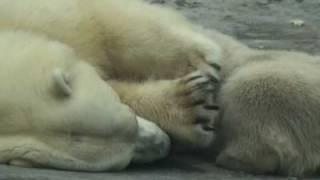 Колыбельная медведицы