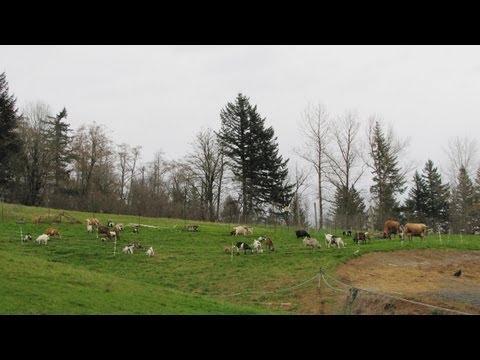 A Small Scale Integrated Livestock Farm