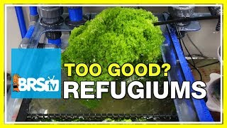FAQ #45: Can a refugium be too effective at absorbing nutrients?
