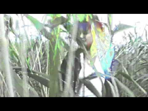 Watch Au.Ra's video for 'Sun' [405 Premiere]