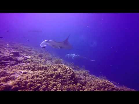 Speel Dampier Strait (Raja Ampat) af