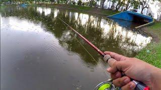 Casting HARUAN @ GABUS 1.5KG ( Finesse Fishing )