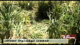 Elephants Damage Crops spl video news 13-12-2013