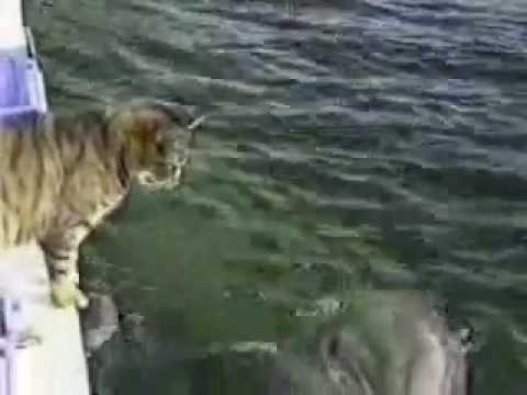gatto socializza con i delfini