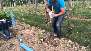 Bryan shows us some of his planting techniques for his newest vineyard we are planting and new grape called