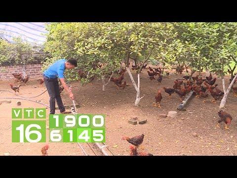 Làm giàu nhờ nuôi gà bằng giun quế dưới vườn chanh | VTC16 - Thời lượng: 2 phút, 43 giây.