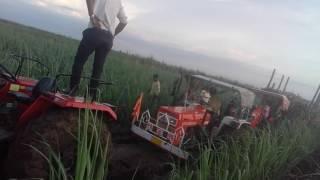 Massey Ferguson 9500 Pulling KUBOTA 55 AND Swaraj 855 tractor tochan