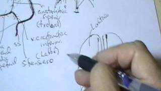 NEUROANATOMIA 2.0: DRENAJE VENOSO DEL SISTEMA NERVIOSO CENTRAL