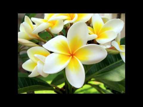 Bunga , Kembang yang Harum