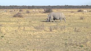 Palapye Botswana  City new picture : Rhino Sanctuary in Palapye, Botswana