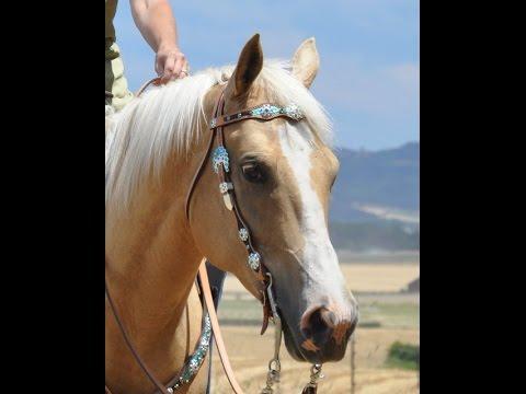 Jozee Girl Custom Crystal Horse Tack