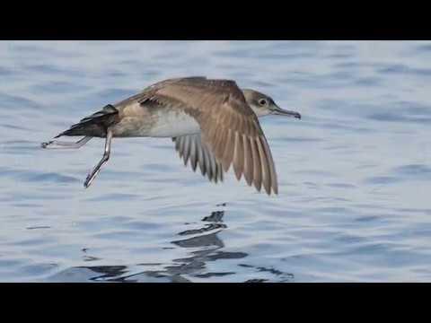 Birding Almassora
