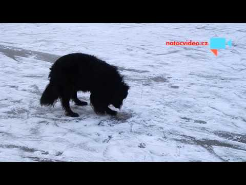 Bady na ledě