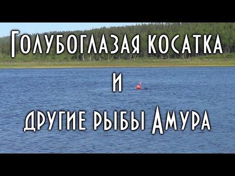 -CHKAXdDQDI