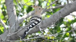 Video A short film of Cypriot birdlife MP3, 3GP, MP4, WEBM, AVI, FLV Oktober 2018