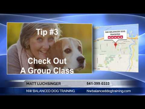 Northwest Premier Dog Trainer Matt Luchsinger with NW BALANCED DOG TRAINING Talks About How to  Find The Right Trainer for Aggressive Dogs