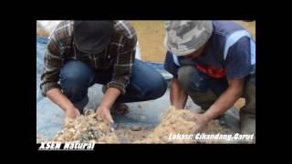 Pakan Ikan Organik Dari Kotoran Domba