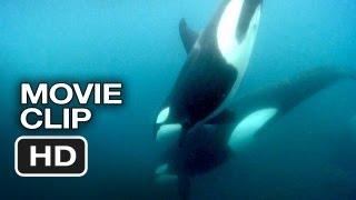 Nonton Blackfish Clip   Whales And Humans  2013    Documentary Hd Film Subtitle Indonesia Streaming Movie Download