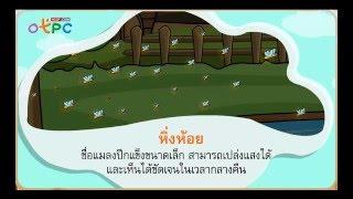 สื่อการเรียนการสอน บึงใหญ่ในป่า ป.3 ภาษาไทย