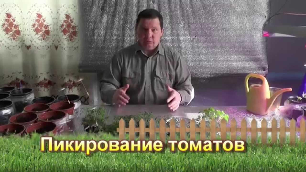 Смотреть онлайн:  Пикирование томатов — сезон 2015