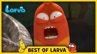 Larva brings you the best of the Larva Episodes for week 29 of 2017. Tune in and join red and yellow on their wild adventures.⏩⏩⏩ SUBSCRIBE to LARVA: http://www.youtube.com/channel/UCph-WGR0oCbJDpaWmNHb5zg?sub_confirmation=1🐌 SEASON 1 - Storm Drain 🐌Red and Yellow, two strange Larva who live underneath a storm drain, encounter many surprises which fall from the outside world to their underground universe. For these two wriggly friends, anything is a good excuse for fun. See the world from Red and Yellow's point of view, and experience what a dangerous and exciting place the world can be for such small friends.🐌 SEASON 2 - HOUSE 🐌Eager to explore the world above, Red & Yellow squat in an old house stuck between high-rise buildings in the big city. Exploring their new home and meeting new creatures means more laughs for the comic duo. Sometimes they fight. Sometimes they find themselves in trouble together. A story of two cute and hilarious larva.🐌 SEASON 3 - NEW YORK 🐌Now it's the New York City. Watch Red and Yellow's incredible abilities while they explore the city. A whole new adventure in a bigger scale! The exciting survival story of two little Larva in New York.🐌 THE CHARACTERS 🐌💛 Yellow 💛 Yellow is a dimwitted and happy-go-lucky yellow colored larva with an antenna. Yellow is always abused by Red, but that never endangers their friendship. Although usually he obeys Red, he loses his mind in front of food.❤️ Red ❤️Red is a mostly hot-tempered and greedy red colored larva. His specialty is shouting and kicking like Bruce Lee. He is always showing off and abusing Yellow, but he often ends up hurting himself instead.💜 Violet 💜Violet is an oversized ghost slug. He is sometimes shown with his lower half buried in the ground. When he is threatened, he exposes his whole body and roars.🚪 Brown 🚪Brown is a cloying dung beetle that gathers poop. To him, poop is either his food or his treasure. He hates it when other insects touch his prized poop. He has a long strand of h