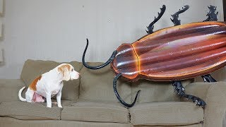 Dog vs Giant Cockroach Prank: Funny Dog Maymo by Maymo