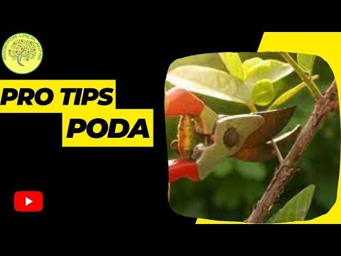 Como y cada cuando podar tus plantas, con resultados!