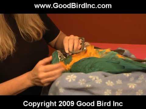 Training Baby Parrots