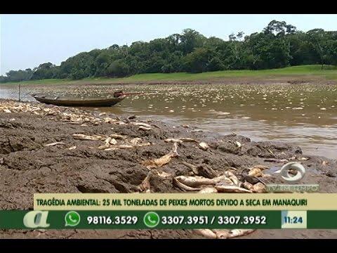 Tragédia ambiental: 25 mil toneladas de peixes mortos devido a seca em Manaquiri - AM