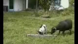 Dailymotion Aksidente Qesharake Pjesa #7 Funny Video
