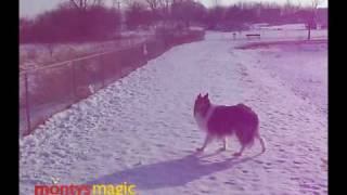 MWCR Collies YouTube video