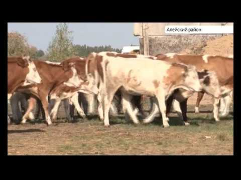 На Алтае живет 21-летний фермер - DomaVideo.Ru