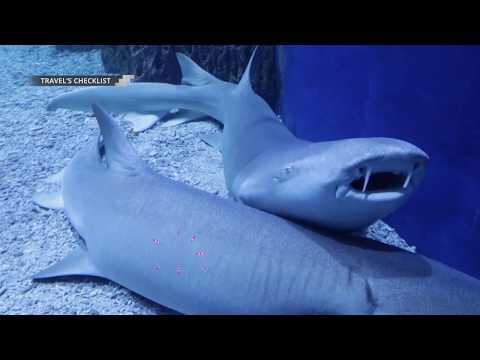 Ciuman Mesra sama Ikan di JAKARTA AQUARIUM!