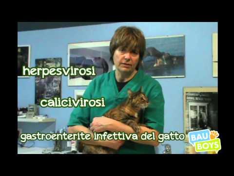 quali sono i vaccini obbligatori per cani e gatti?