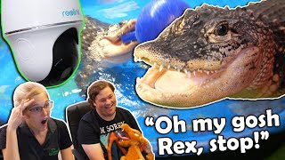 Spying on our Pet Alligator with a Security Camera! by Snake Discovery