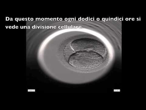 INSTITUT MARQUÈS - Sviluppo di un embrione umano visto con l'Embryoscope