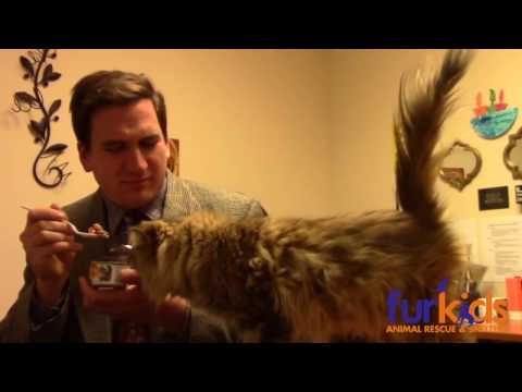 Kissasuojan pienen budjetin mainos räjäyttää netin – Furkids Animal Rescue and Shelters