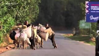 La route principale du Burundi, l'un des plus petits pays d'Afrique, s'étend de la frontière rwandaise, au nord, à la Tanzanie au sud. Tharcien, jeune coursier ...