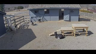 Farm Animals Relaxing | The Dodo Tranquil Tuesdays LIVE by The Dodo