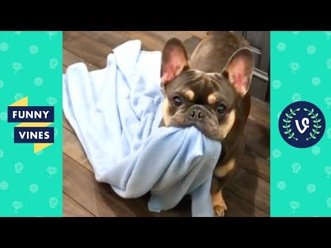 TRY NOT TO LAUGH - Funny Animals & Cute Pets Compilation  Funny Vines August 2018