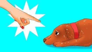 Video 12 Harmful Things You Do to Your Dog Without Realizing It MP3, 3GP, MP4, WEBM, AVI, FLV Agustus 2018