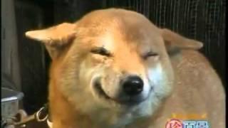 El perro que sonrie
