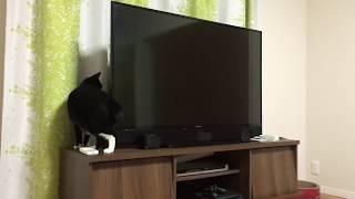 胴がめちゃくちゃ伸びる猫がいた…テレビの後ろで!?(動画)
