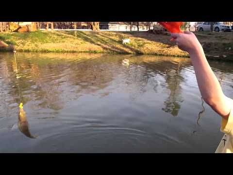 Little pond fishing for Bass fishing in ponds