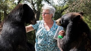 Video The Granny Who Lives With Two Bears And A Tiger: BEAST BUDDIES MP3, 3GP, MP4, WEBM, AVI, FLV Agustus 2017