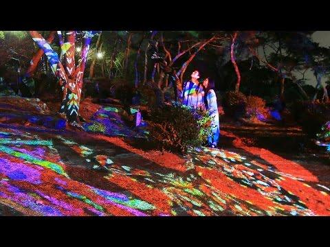 夜桜と楽しんで 松林にデジタルアート