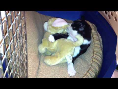 Puppy kills a stuffed toy