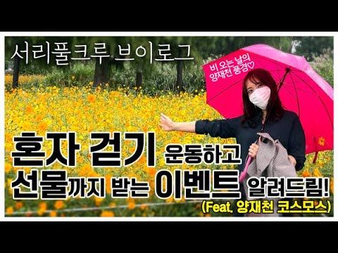 [서리풀크루 브이로그] 혼자 걷기 운동하면 선물을 준데요! (Feat.양재천 코스모스)