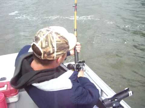 Columbia River Sturgeon Jump